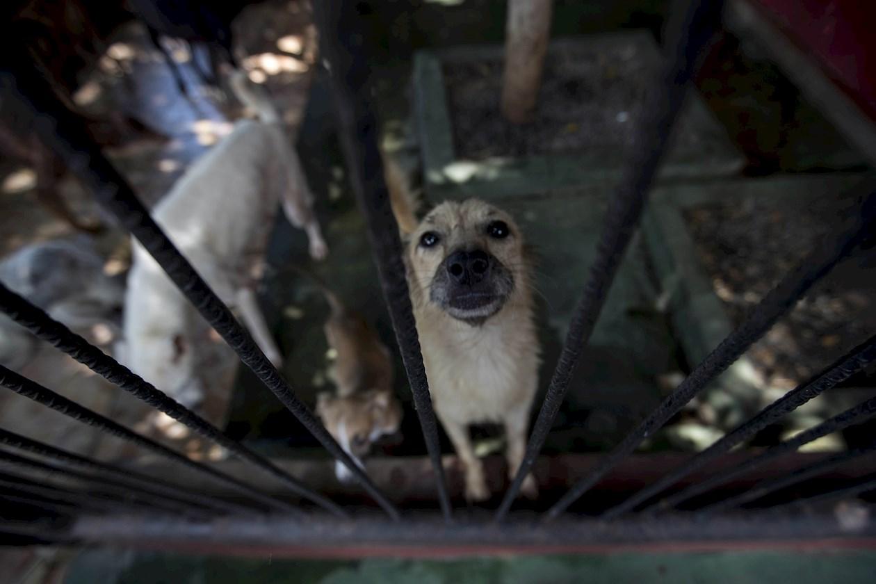 Perros podrían volver a las calles